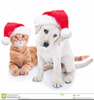 Free Group Of Pets Clipart Image