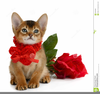 Valentine And Cat Clipart Image
