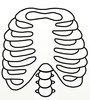 Ribs Clipart Image