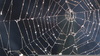 Free Clipart Of Spider Webs Image