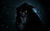 D Black Wolf Wallpapers Hd Image