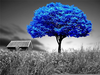 Blue Trees Wallpaper Image