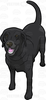 Black Lab Cartoon Clipart Image