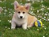 Cutest Dogs Ever At Dogpacer Image