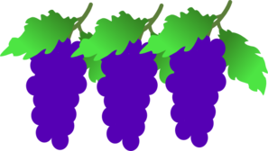 Grape Clusters Clip Art