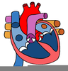 Human Circulatory System Clipart Image