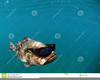 Cool Fish Clipart Image