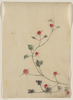 [small Red Blossoms On A Vine] Image