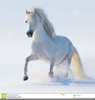 Welsh Pony Clipart Image