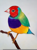 Colorful Bird Drawings Image