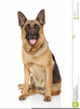 Free Clipart German Shepherd Dog Image