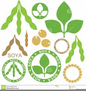 soybean clipart free images at clker com vector clip art online rh clker com soybean cartoon soybean cartoon
