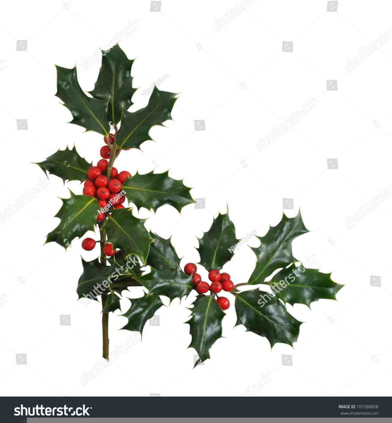 Christmas Holly Clipart Free Borders Free Images At Clker Com Vector Clip Art Online Royalty Free Public Domain