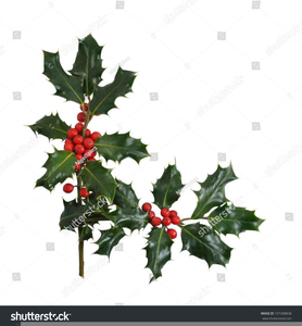 Christmas Holly Clipart Png.Christmas Holly Clipart Free Borders Free Images At Clker