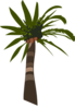 Palm Tree Vector Clip Art