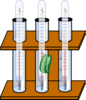 Thermometer In Beaker With Peas And Cricket Clip Art