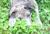 Puppy In Clover Image