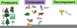 Clipart Of Water Animals Image