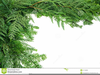 Free Clipart Vine And Branches Image