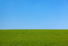 Grass And The Sky Background Image