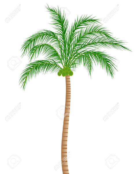 Coconut Tree Clipart Black And White Free Images At Clker Com