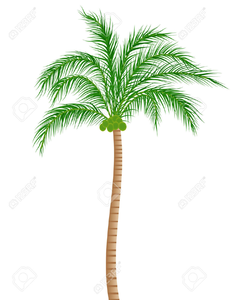 Coconut Tree Clipart Black And White Image