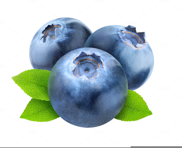 free blueberries clipart