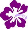 Purple Hibiscus Md Image