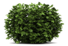 Clipart Trees Bushes Grass Image
