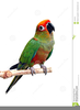 Free Clipart Birds In Flight Image