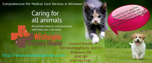 Best And Affordable Pet Care Services In Kitchener Image