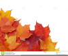 Free Clipart Images Fall Leaves Image