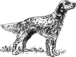 English Setter Dog 2 Clip Art