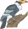 Hornbill On A Branch Clip Art
