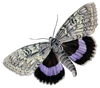 Vintage Butterfly Real Purpl Grey Image