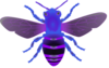 Bee Blue Purple Image