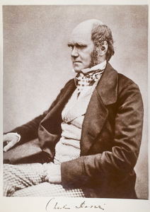 Charles Darwin Seated Image