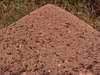 Ant Hill Image