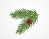 Evergreen Boughs Clipart Image