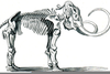 Wooly Mammoth Skeleton Clipart Image