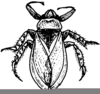 Water Boatman Drawing Image
