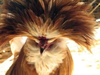 Chicken Hairstyle Image