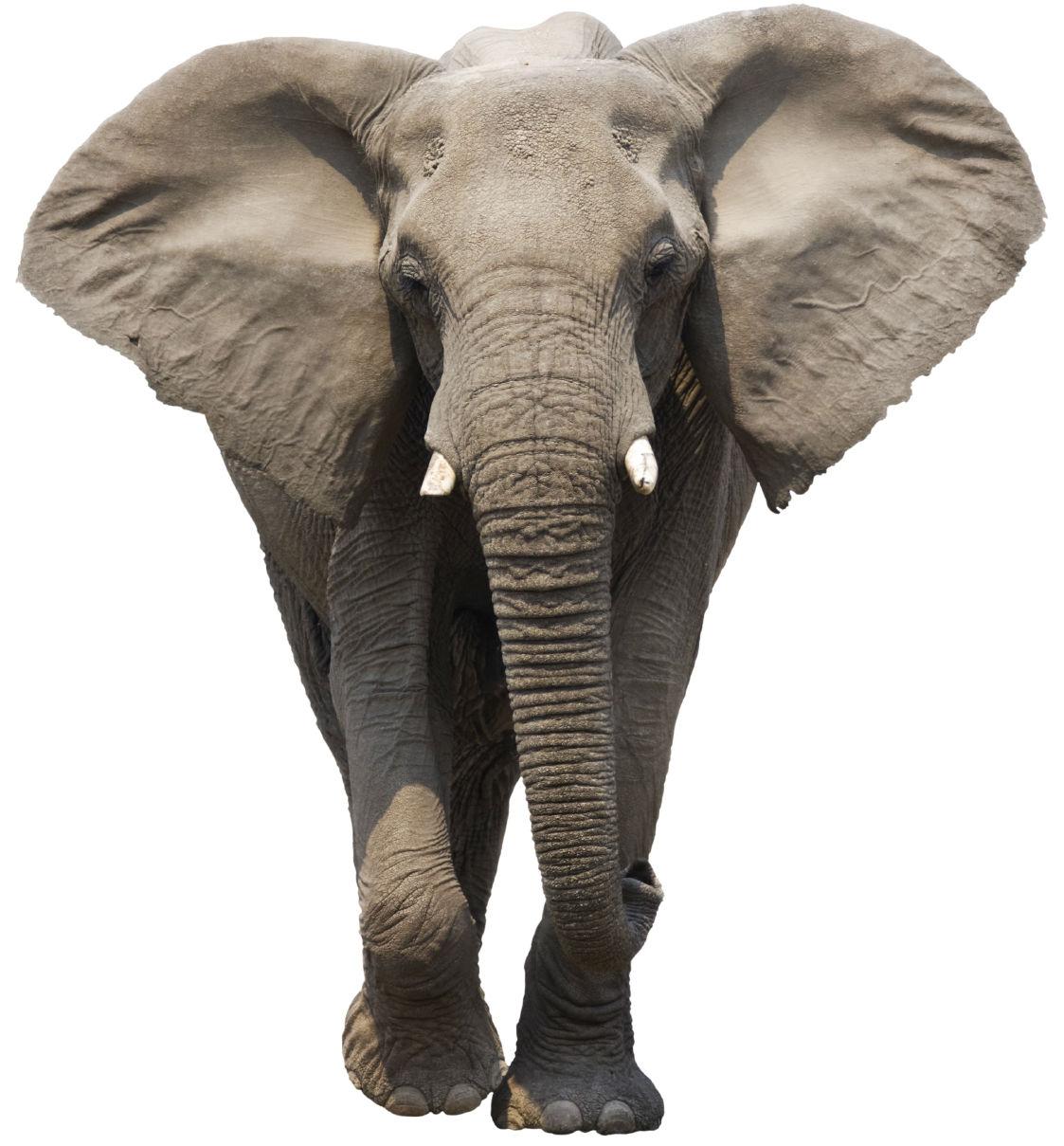Elephant | Free Images at Clker.com - vector clip art ...