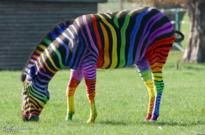 Rainbow Zebra Wallpapers Free Images At Clkercom Vector