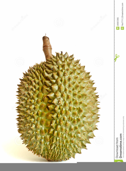free clipart durian free images at clker com vector clip art online royalty free public domain clker