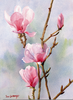 Magnolia Watercolor Painting Image