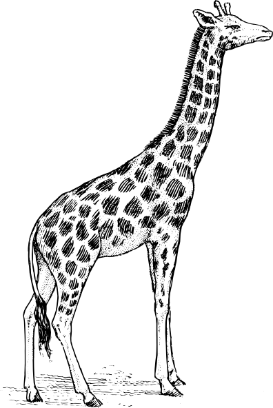 Giraffe Head Clipart Black And White Clip Art Vector