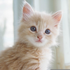 Cute Kitten Pictures Image