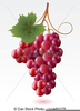 Free Grapevine Clipart Image