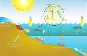 Ocean Ecosystem Diagram Free Images At Clker Com